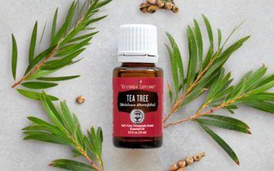 Aceite de árbol del té: La forma más rápida y natural de acabar con los piojos
