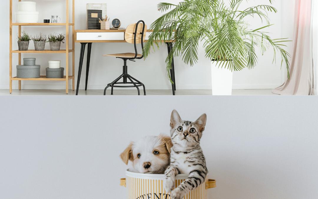 Cómo tener mascotas y plantas más saludables