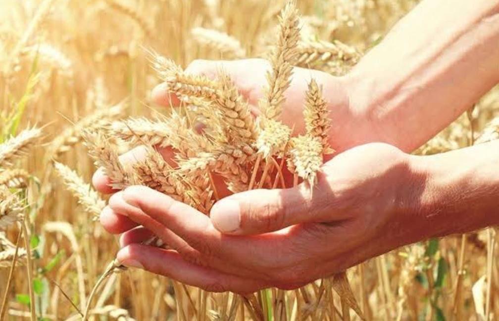 Hábitos para atraer la abundancia a tu vida