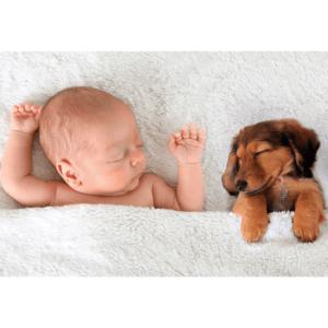 bebé y mascota durmiendo - shambala esenciales insomnio